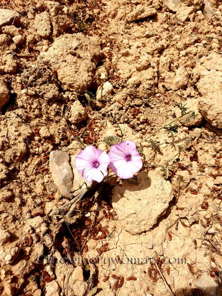 Wildflowers4_4.14.19_TWW