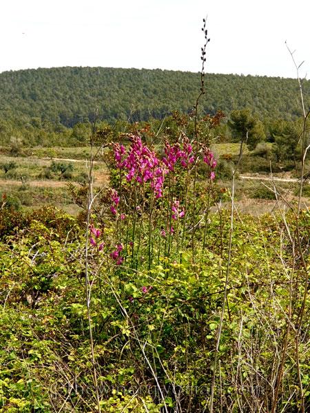 Wildflowers5_4.14.19_TWW