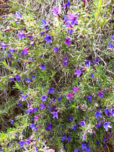 Wildflowers6_4.14.19_TWW