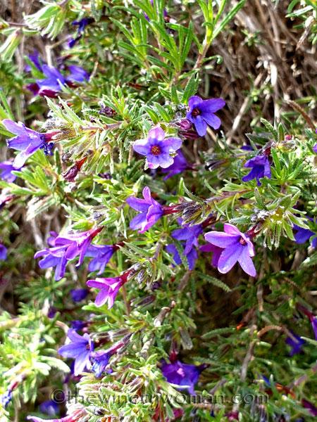Wildflowers7_4.14.19_TWW