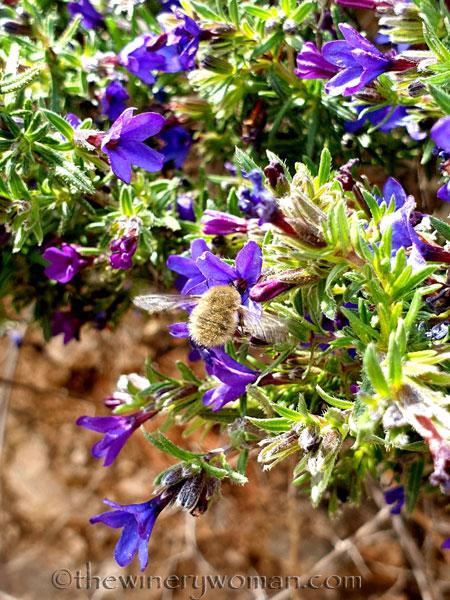 Wildflowers8_4.14.19_TWW