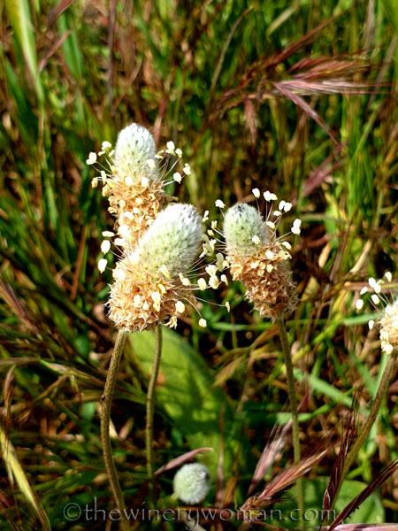 Wildflowers_4.14.19_TWW