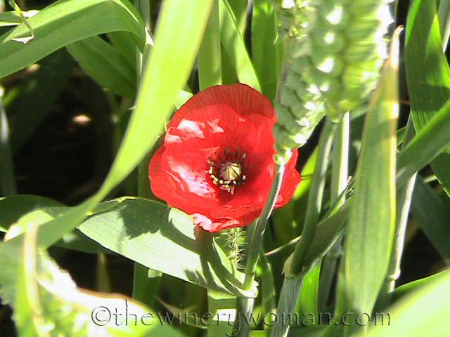 Memorial_Day_Normandy_5.27.19_TWW