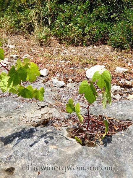 Rock_Flowers2_5.18.19_TWW