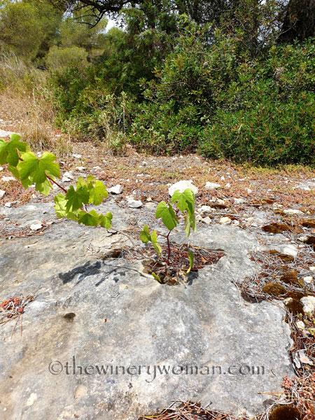 Rock_Flowers3_5.18.19_TWW
