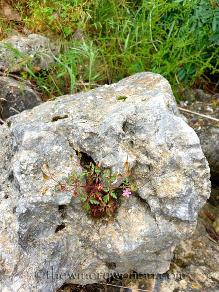 Rock_Flowers4_5.18.19_TWW