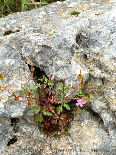 Rock_Flowers5_5.18.19_TWW