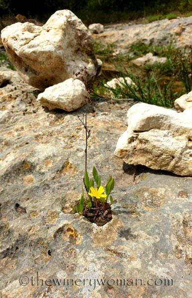 Rock_Flowers_5.18.19_TWW
