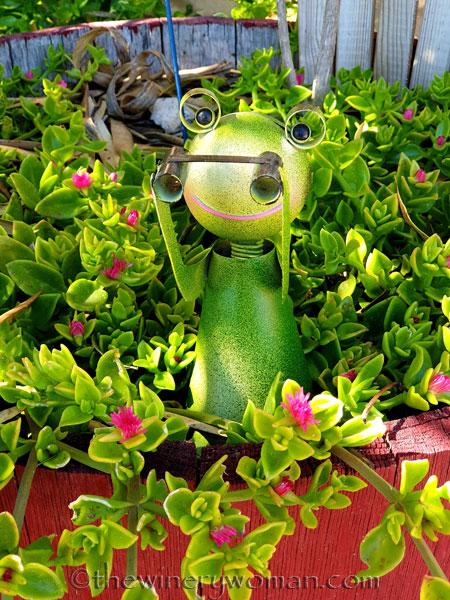Garden_Frog2_5.31.19_TWW