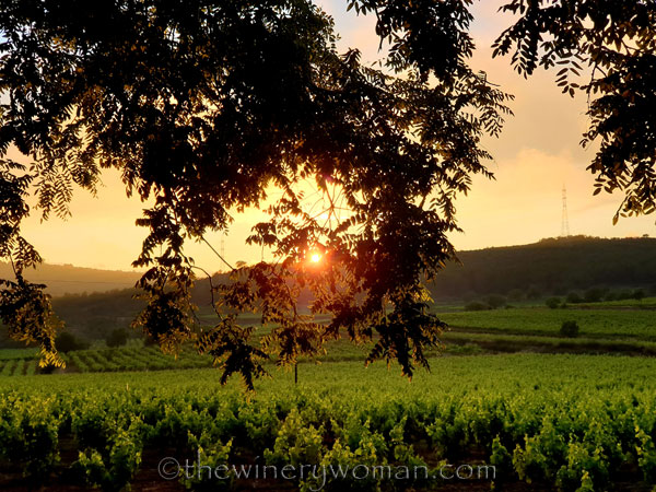 Sunset_Vineyard10_6.11.19_TWW