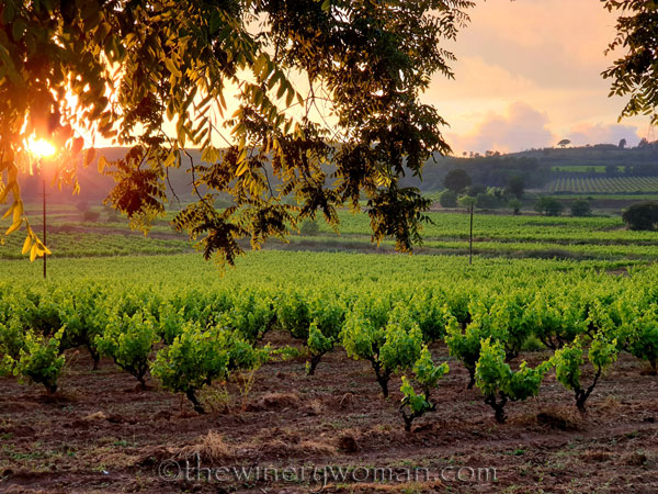 Sunset_Vineyard12_6.11.19_TWW