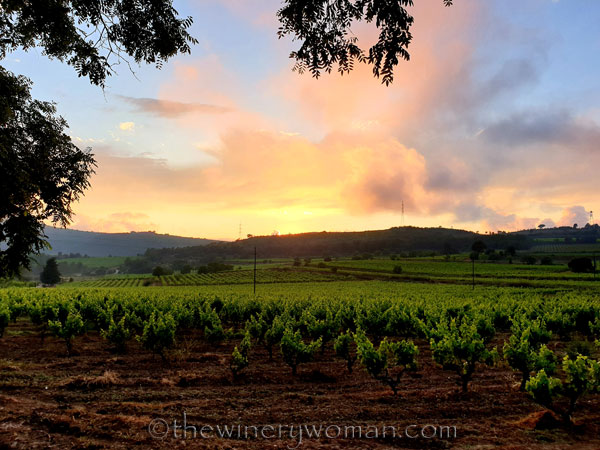 Sunset_Vineyard15_6.11.19_TWW