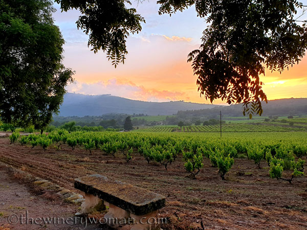 Sunset_Vineyard16_6.11.19_TWW
