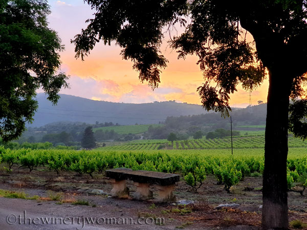 Sunset_Vineyard18_6.11.19_TWW