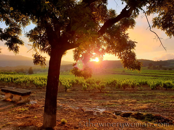 Sunset_Vineyard7_6.11.19_TWW