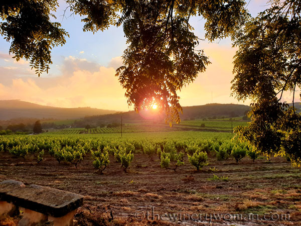 Sunset_Vineyard9_6.11.19_TWW