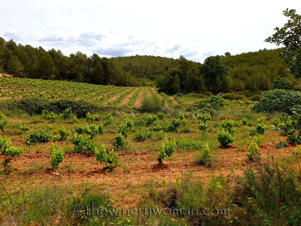 Vineyard_walk7_5.29.19_TWW