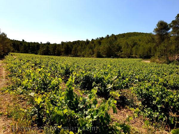 Walk_in_the_vineyard16_6.15.19_TWW