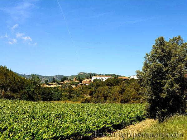 Walk_in_the_vineyard23_6.15.19_TWW