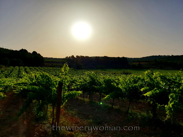 Walk_in_the_vineyard5_6.26.19_TWW