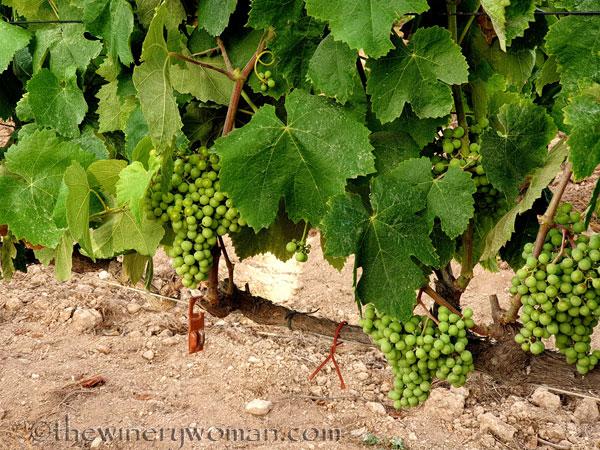 Grapes10_7.13.19_TWW