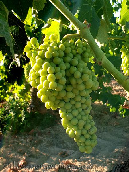 Grapes17_7.13.19_TWW