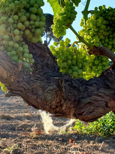 Grapes20_7.13.19_TWW