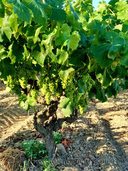 Grapes22_7.13.19_TWW