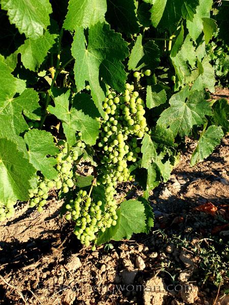 Grapes26_7.13.19_TWW