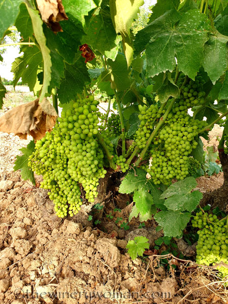 Grapes8_7.13.19_TWW