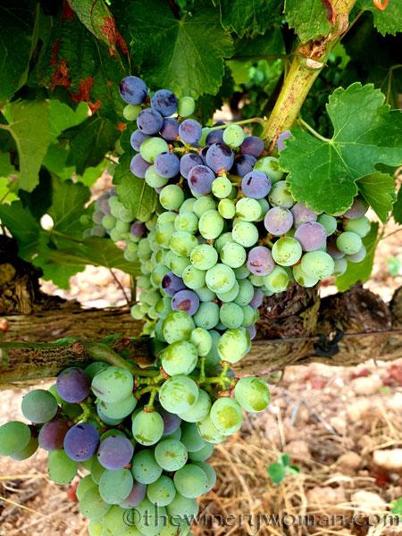 Grapes_Viladellops5_7.30.19_TWW