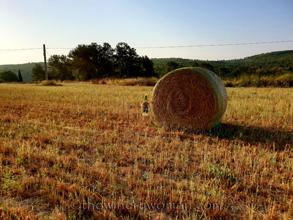 Scarecrow_and_Hay2_7.2.19_TWW