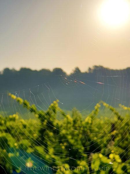 Sunrise20_7.1.19_TWW