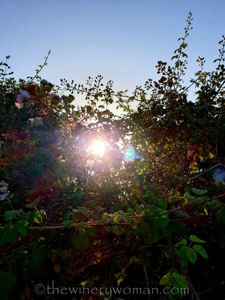 Sunrise26_7.1.19_TWW
