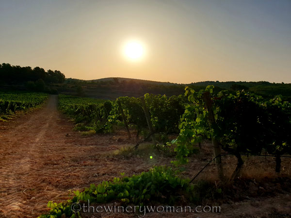Walk_in_the_vineyard4_7.23.19_TWW