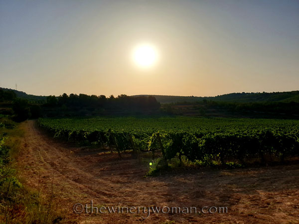 Walk_in_the_vineyard6_7.23.19_TWW
