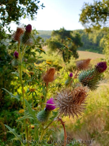 Wildflowers2_7.2.19_TWW