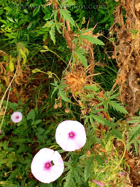 Wildflowers2_7.8.19_TWW