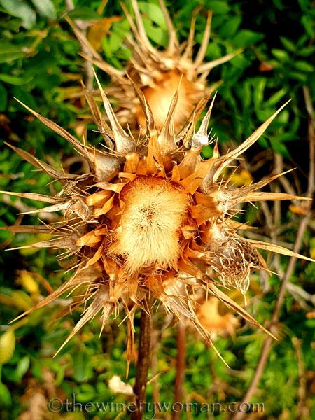 Wildflowers3_7.8.19_TWW