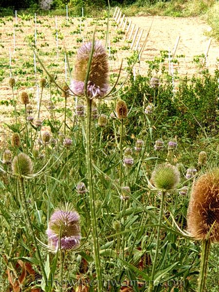 Wildflowers4_7.8.19_TWW