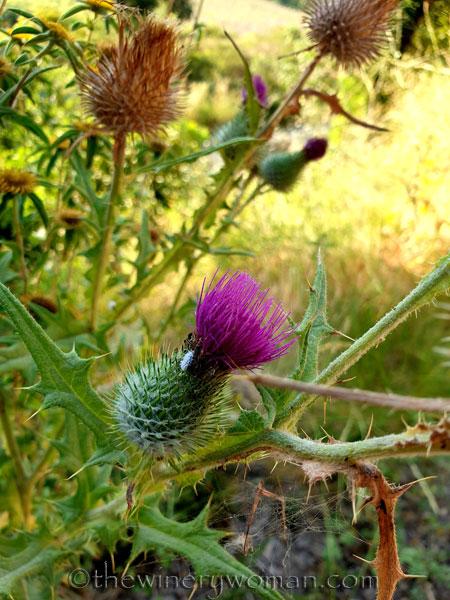 Wildflowers_7.2.19_TWW