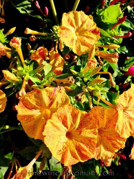 Flowers6_7.29.19_TWW