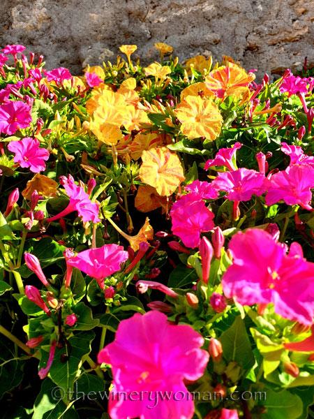 Flowers7_7.29.19_TWW