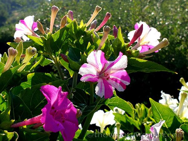 Flowers_7.29.19_TWW