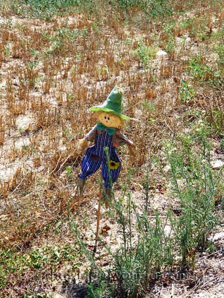 Scarecrow3_8.21.19_TWW