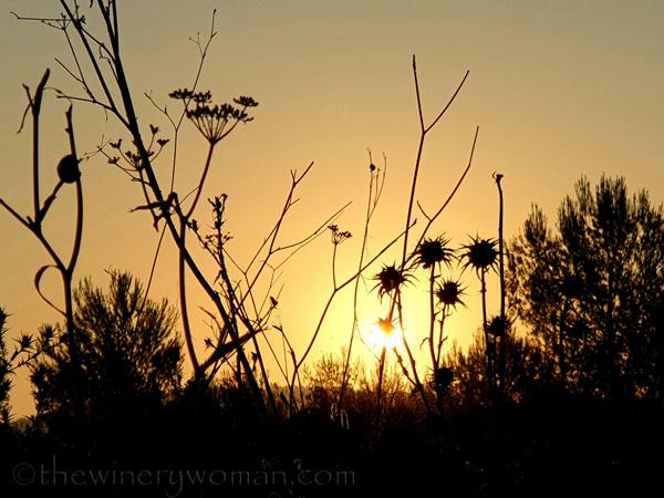 Sunrise_Vineyard12_8.8.19_TWW
