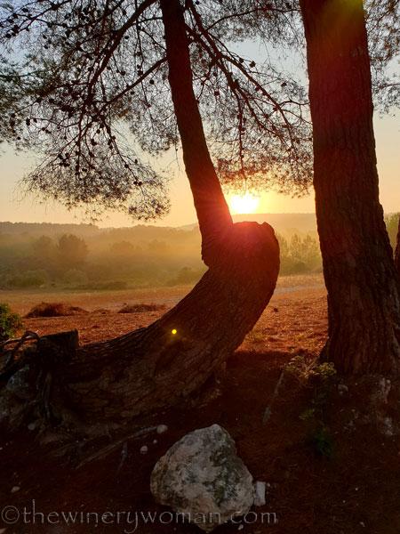 Sunrise_Vineyard13_8.8.19_TWW