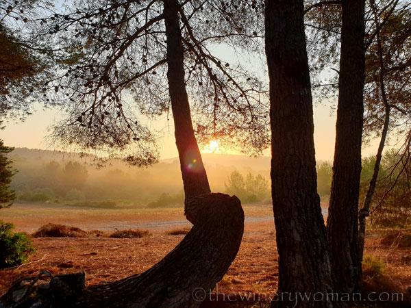 Sunrise_Vineyard14_8.8.19_TWW
