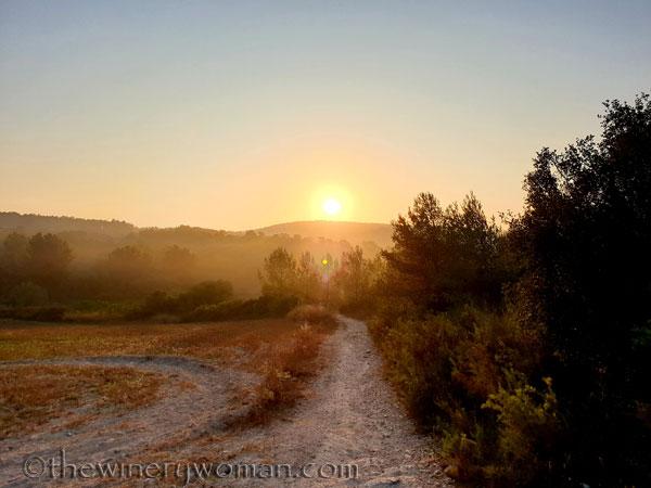 Sunrise_Vineyard15_8.8.19_TWW