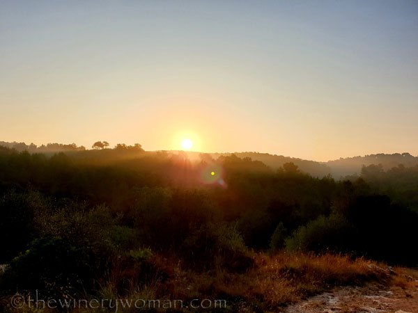 Sunrise_Vineyard16_8.8.19_TWW